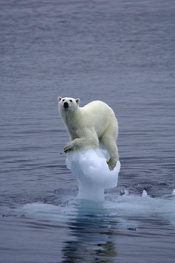 El Derretimiento Polar